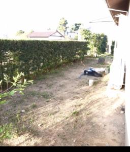 剪定、刈込み、除草、等 お庭の管理致します。